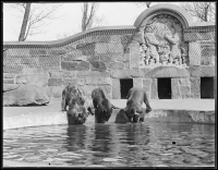 A vintage photo of bears in front of the stone carving.