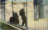A old postcard view of the Bear Cages.
