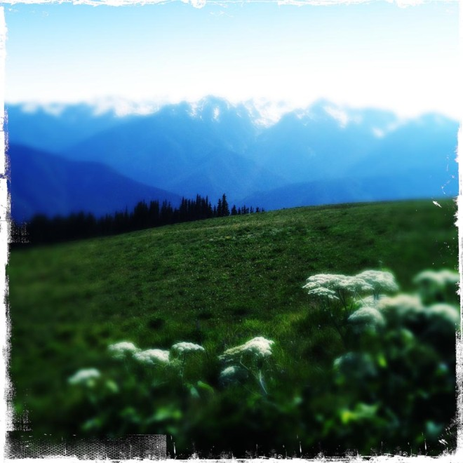 On top of Hurricane Ridge.