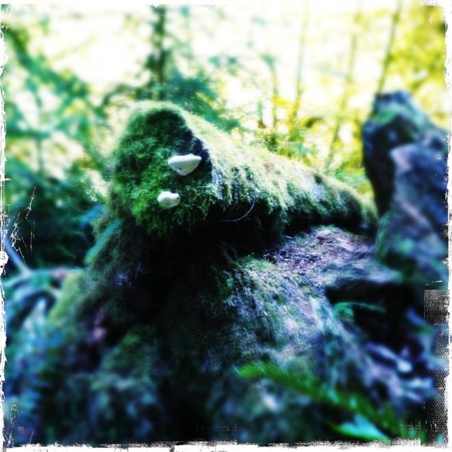 Hoh Rain Forest.